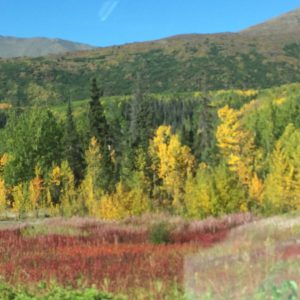 Kluane Fall Color
